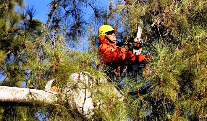Tree removal permit Boulder 2