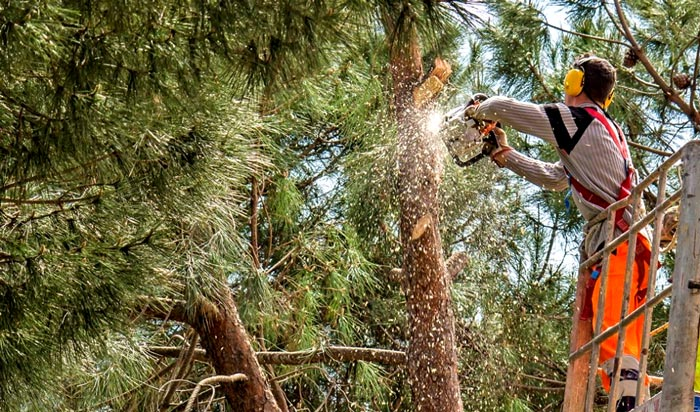Tree removal permit Centennial 2