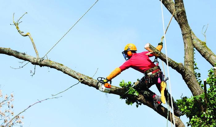 Tree removal permit Champaign_2