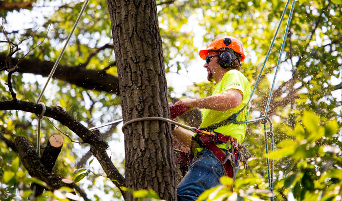 Tree removal permit Cook Country_2