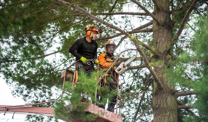 Tree removal permit Denver2
