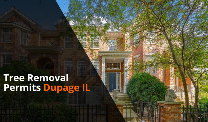 Tree removal permit Dupage