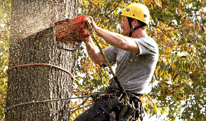 Tree removal permit Greeley 2
