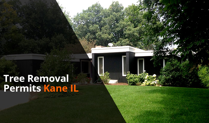 Tree removal permit Kane Country