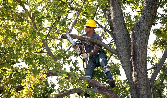 Tree removal permit Lakewood2