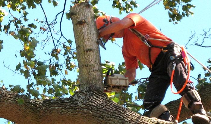 Tree removal permit Pueblo 2