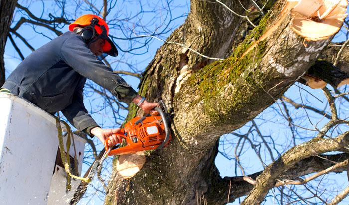 Tree removal permit San Jose 2