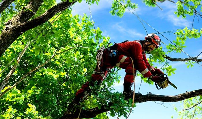 Tree removal permit SanFrancisco 2