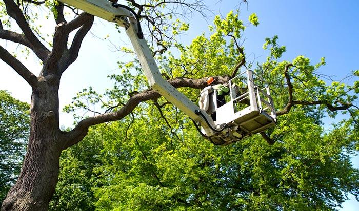 Tree removal permit Sangamon 2