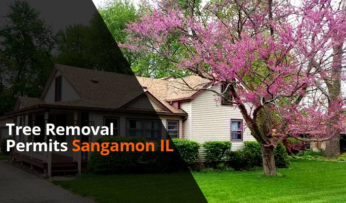 Tree removal permit Sangamon