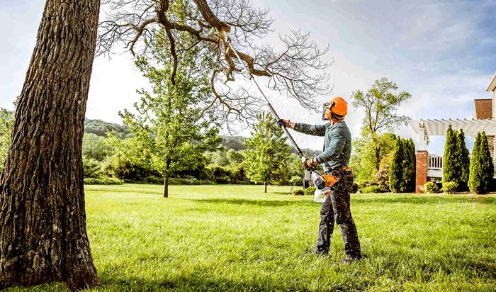Tree removal permit Santa Ana 2