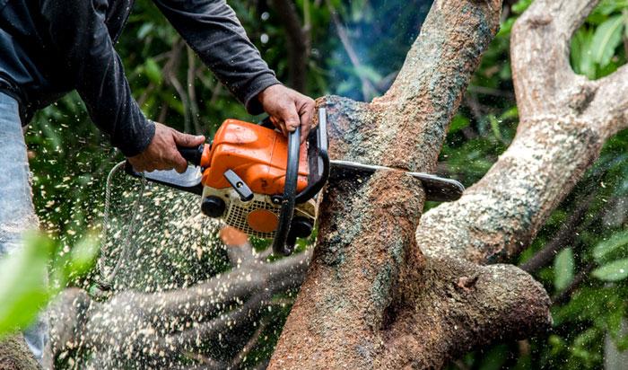 Tree removal permit Santa Clarita 2