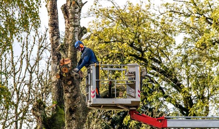Tree removal permit Stockton 2