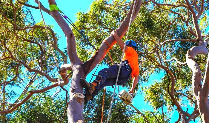 Tree removal permit Thornton 2
