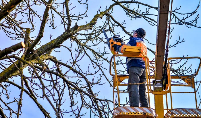 Tree removal permit Westminster 2
