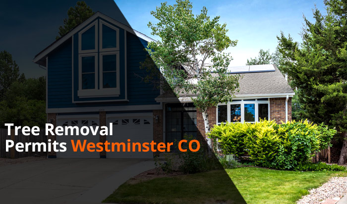 Tree removal permit Westminster