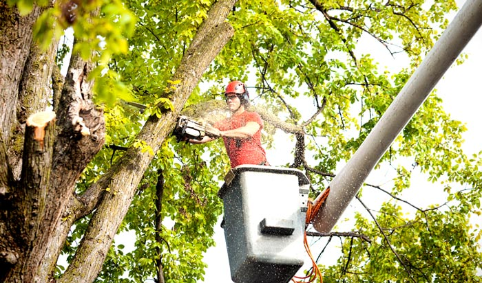 Tree removal permit Winnebago 2