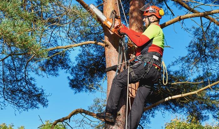 Tree removal permit aurora2