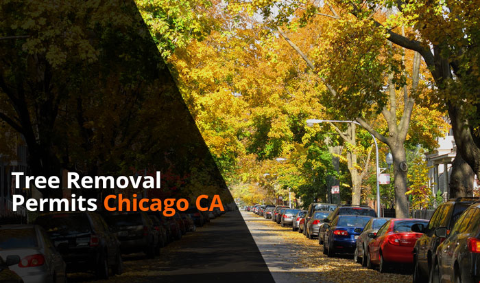 Tree removal permit chicago
