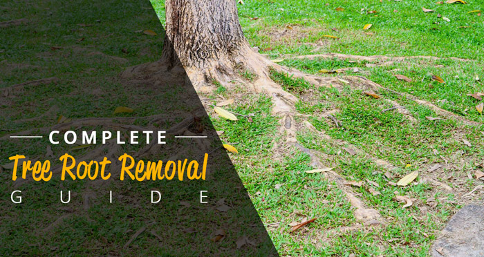 complete tree root removal guide