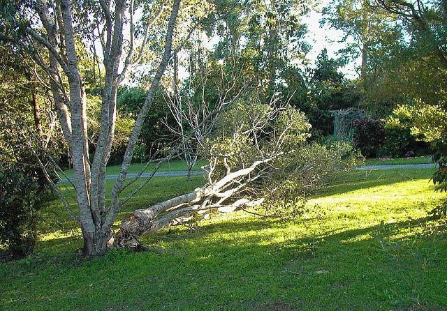 Downed tree in backyard
