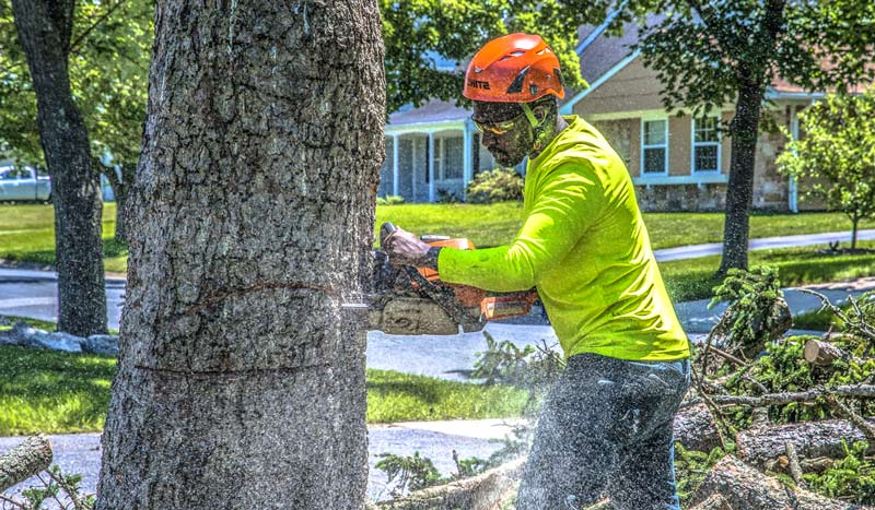 person who cuts down trees is an arborist