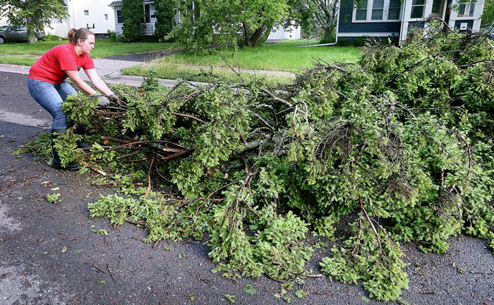 Removal of tree debris from front yard