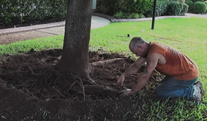 removing tree roots by hand