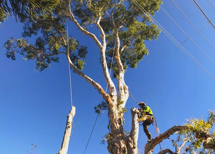 Tree branch being removed by local tree service