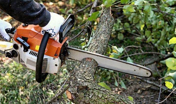 Tree Debris Clean Up