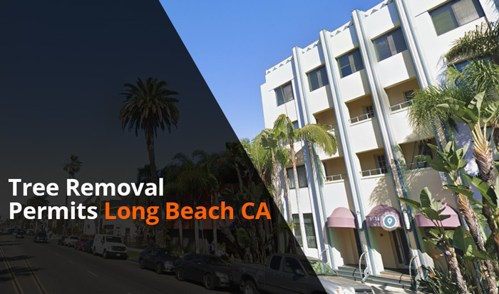 Tree removal permit Long Beach CA