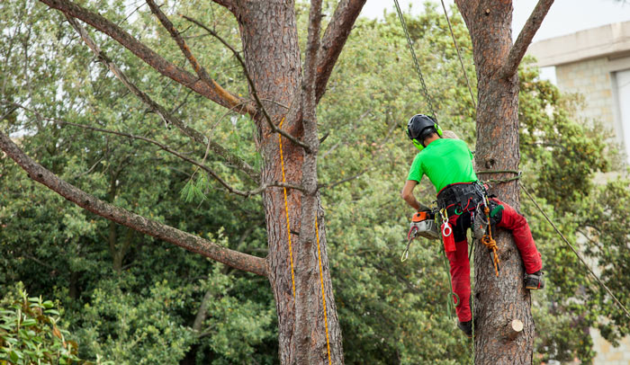 Tree company removing tree in long beach ca