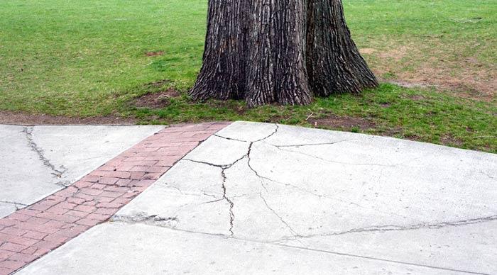 tree roots lifting concrete