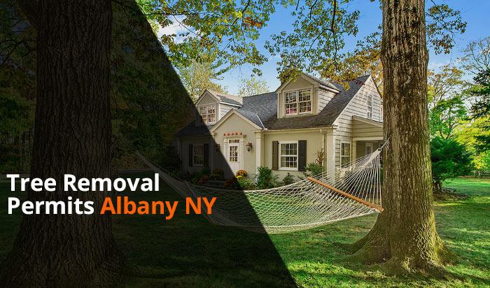 Tree removal permit Albany v1