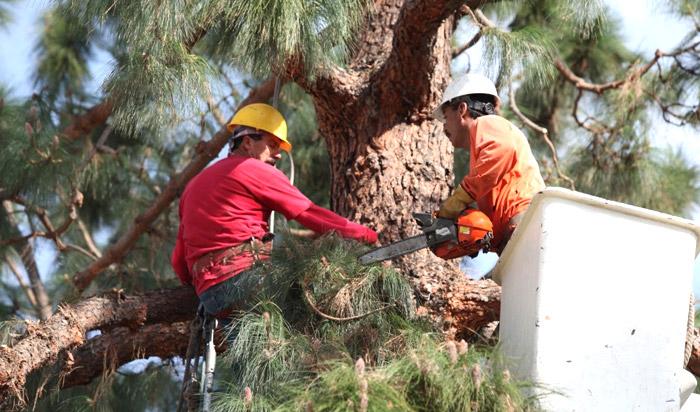 Tree removal permit Albany v2