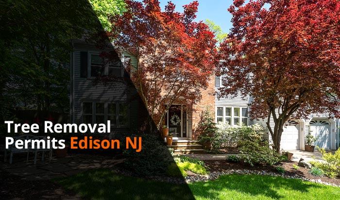 Tree removal permit Edison v1