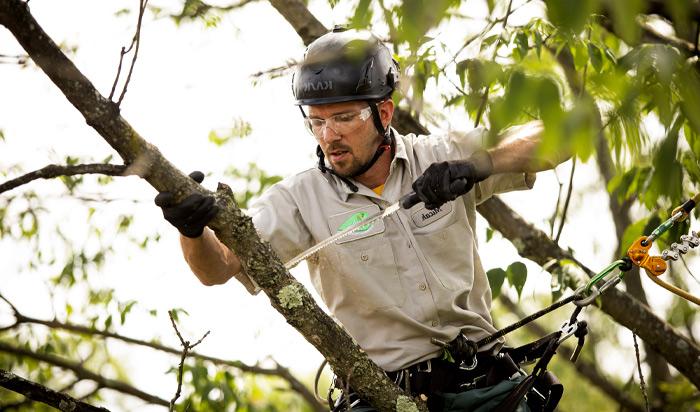 Tree removal permit Edison v2
