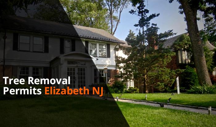 Tree removal permit Elizabeth v1
