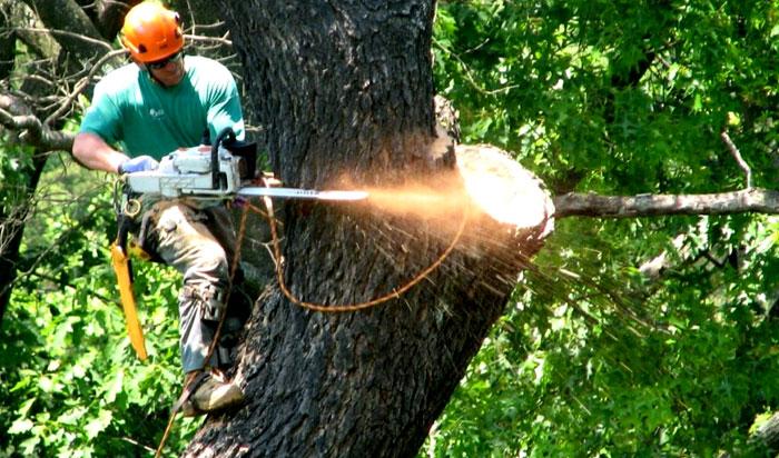 Tree removal permit Elizabeth v2