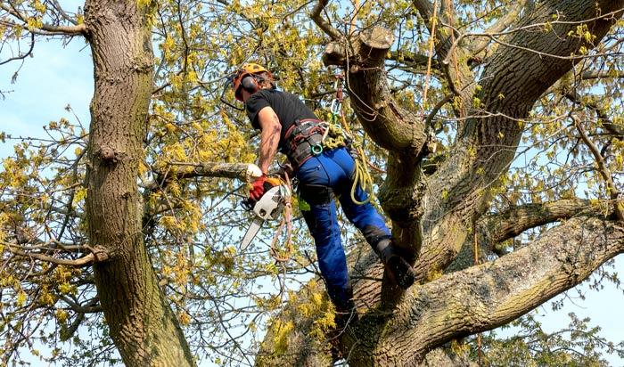 Tree removal permit Hamilton v2