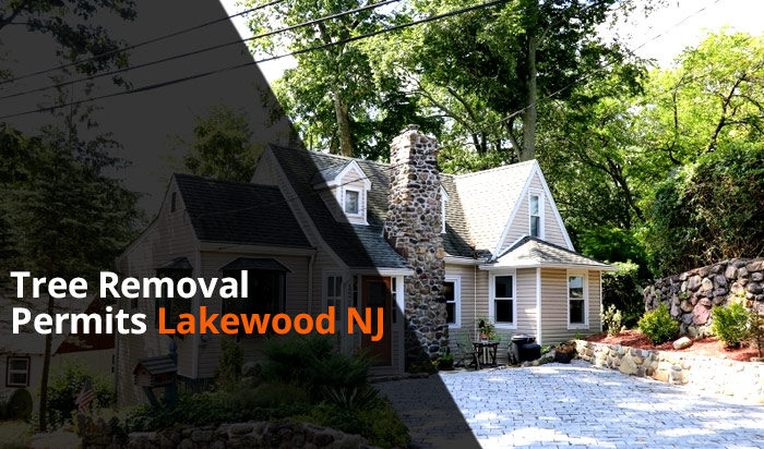 Tree removal permit Lakewood v1