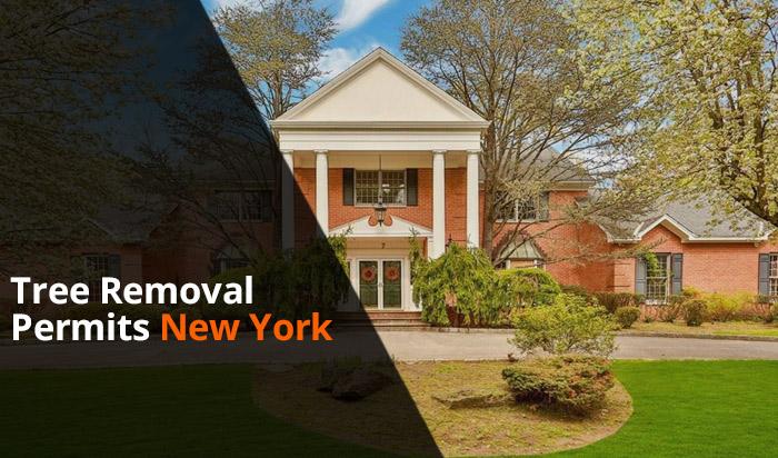 Tree removal permit Newyork v1