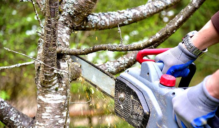 Tree removal permit Newyork v2