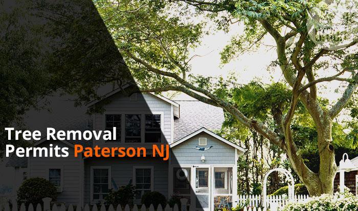 Tree removal permit Paterson v1