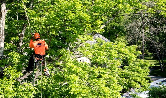 Tree removal permit Paterson v2