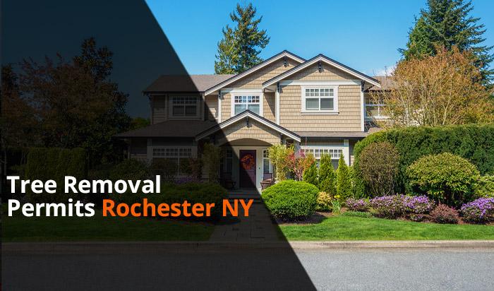 Tree removal permit Rochester v1