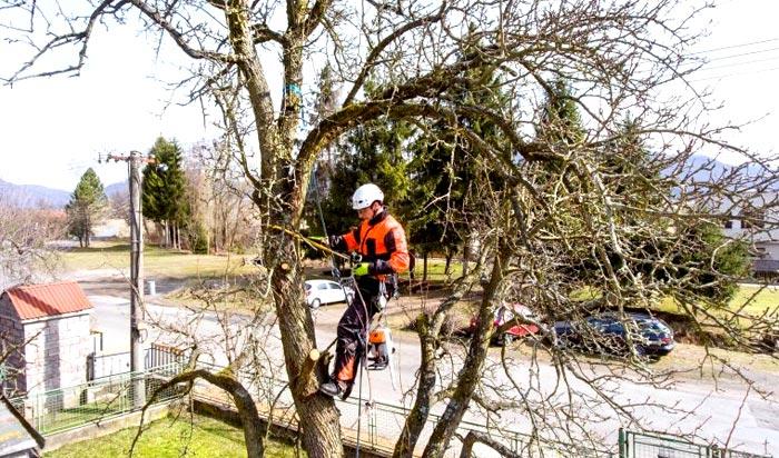 Tree removal permit Rochester v2
