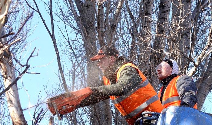 Tree removal permit Syracuse v2