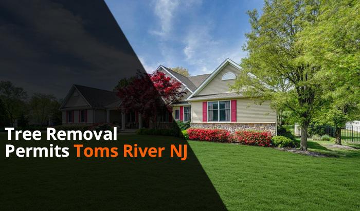 Tree removal permit Toms River v1