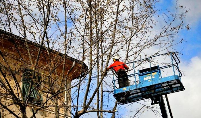 Tree removal permit Toms River v2